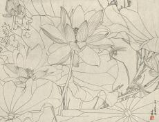 荷花蜻蜓画稿
