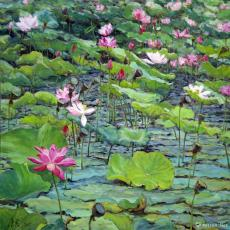 夏荷图 Summer Lotus