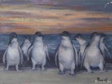 澳洲·企鹅晚归
