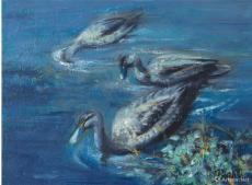 澳洲·野鹅戏水