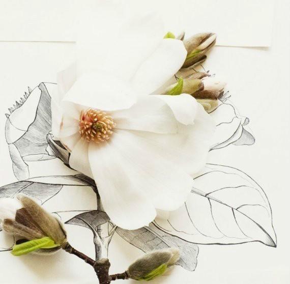 静物摄影:玉兰花和手绘昆虫的结合