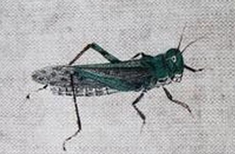 吕晓:齐白石笔下的草虫世界之作品价值