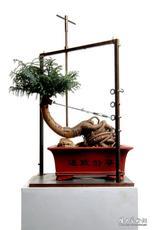盆景一号 Bonsai No.1