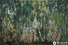 繁密的白桦林