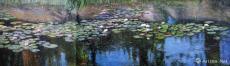 柳岸睡莲 Willow and Water Lily
