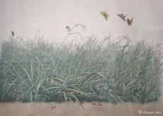 百草园-蝴蝶