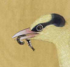 榴枝黄鸟图-头部