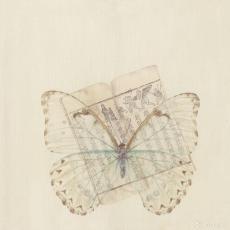 蝶赋-敦煌3